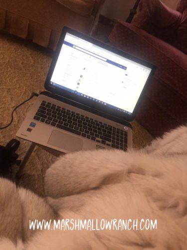 Laptop and a fur throw.
