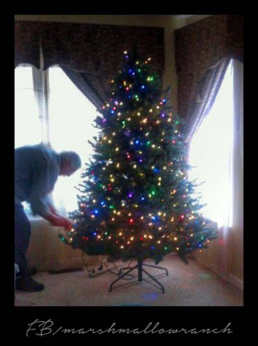 Man decorating Christmas tree.