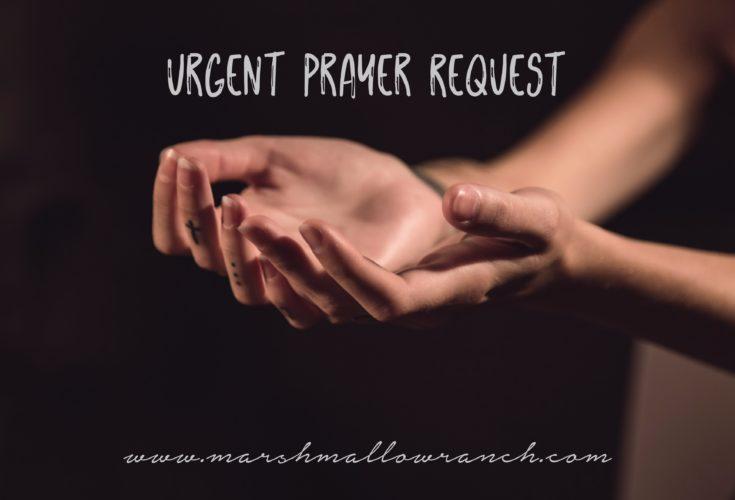 Woman's hands open in prayer.