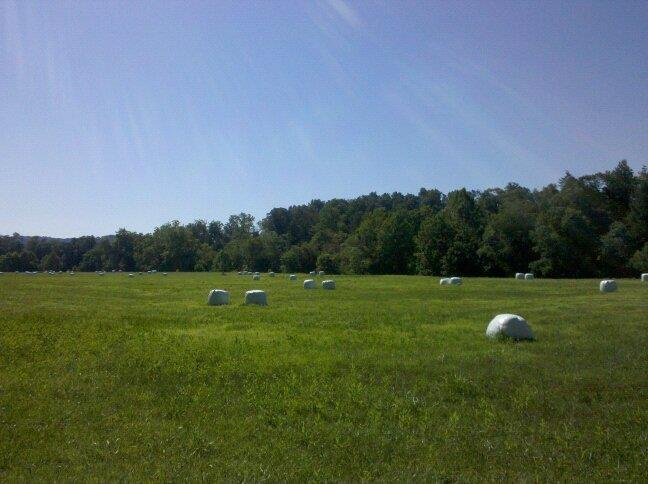 White plastic wraps round hay bales in a field in West Virginia, looking all the world like a Marshmallow Ranch.