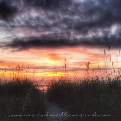 Sunrise over beach grass. Myrtle Beach, South Carolina