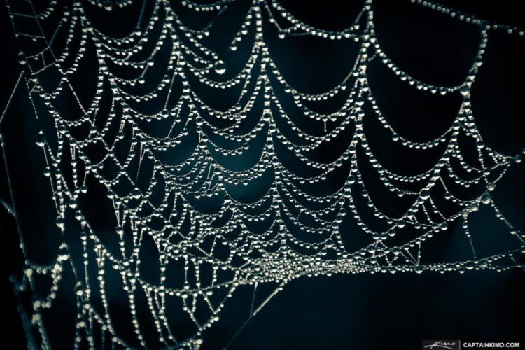 Spider web with dew.