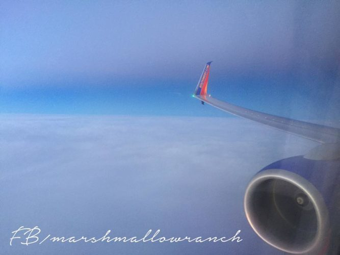 View out the window of a Southwest plane over clouds.