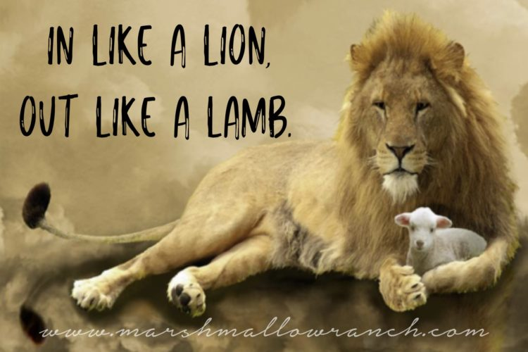 In Like a lion...out like a lamb.